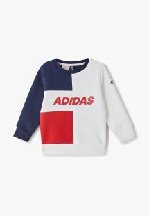 Купить свитшот adidas ad002ebfkop8cm128